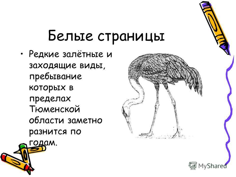 Белые страницы Редкие залётные и заходящие виды, пребывание которых в пределах Тюменской области заметно разнится по годам.