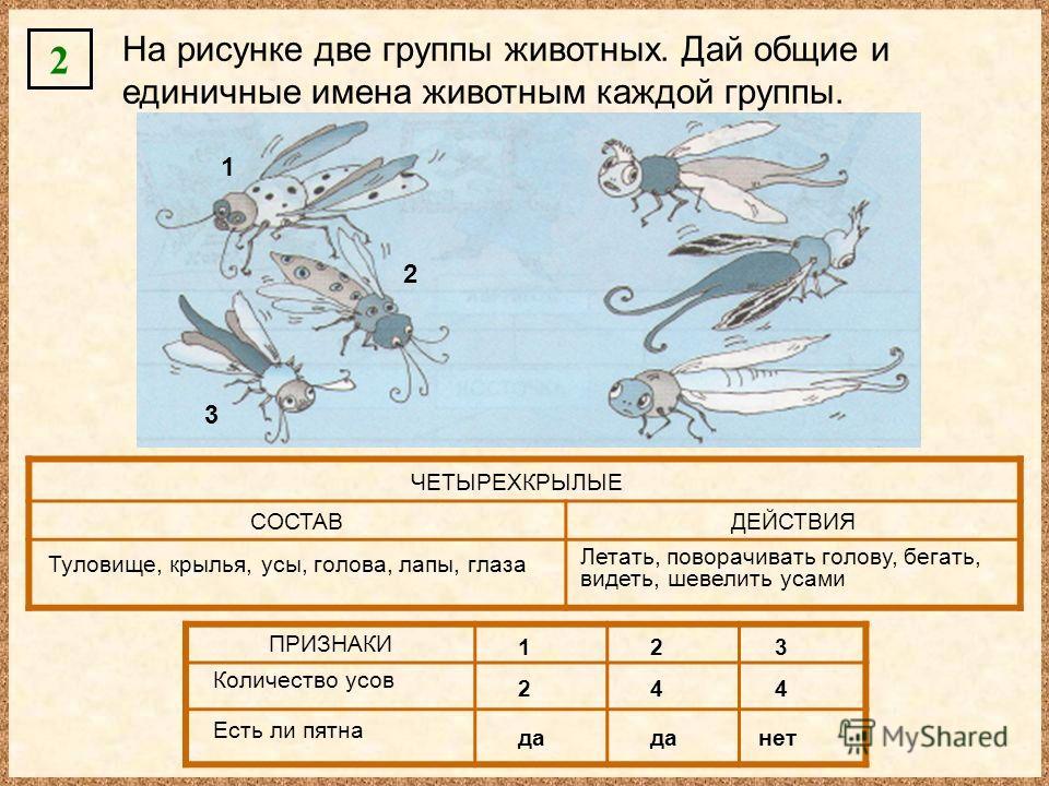 2 На рисунке две группы животных. Дай общие и единичные имена животным каждой группы. СОСТАВДЕЙСТВИЯ ПРИЗНАКИ ЧЕТЫРЕХКРЫЛЫЕ Туловище, крылья, усы, голова, лапы, глаза Летать, поворачивать голову, бегать, видеть, шевелить усами 1 2 3 123 Количество ус