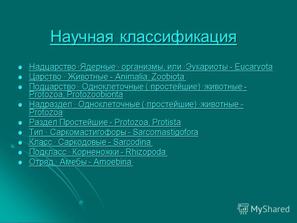 Научная классификацияНаучная классификация Научная классификация Научная классификация Надцарство ·Ядерные · организмы, или ·Эукариоты - Eucaryota Надцарство ·Ядерные · организмы, или ·Эукариоты - Eucaryota Надцарство ·Ядерные · организмы, или ·Эукар