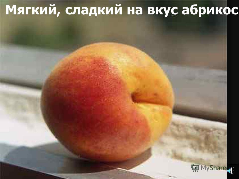 Так растет абрикос