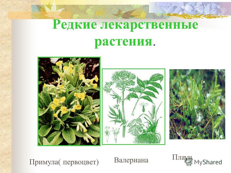 Редкие растения. Кувшинка белая Волчье лыко Сон-трава