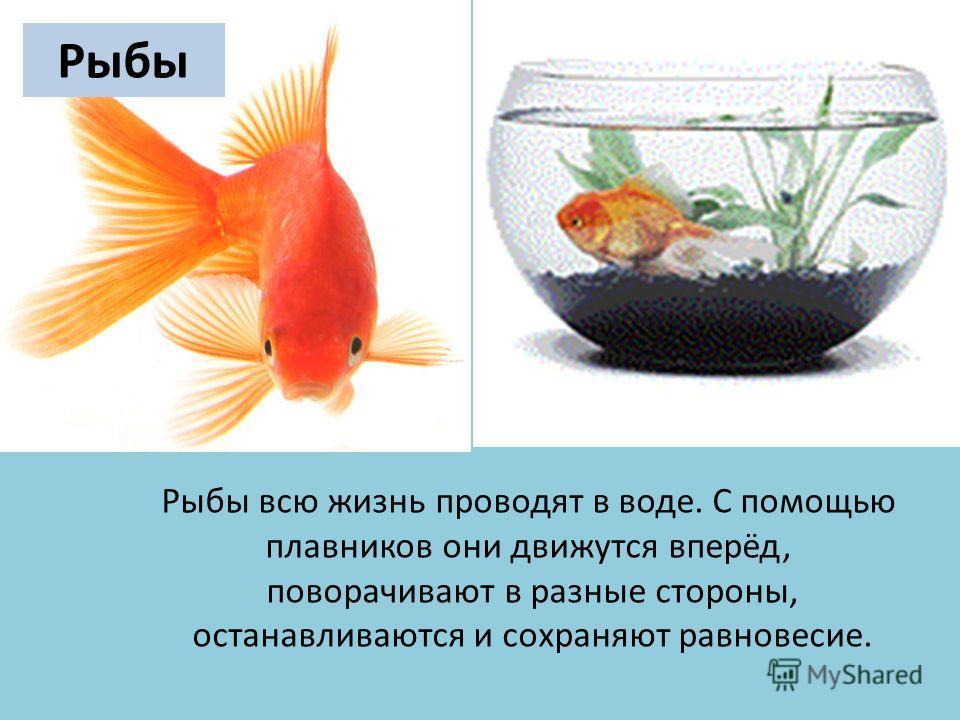 Рыбы всю жизнь проводят в воде. C помощью плавников они движутся вперёд, поворачивают в разные стороны, останавливаются и сохраняют равновесие. Рыбы