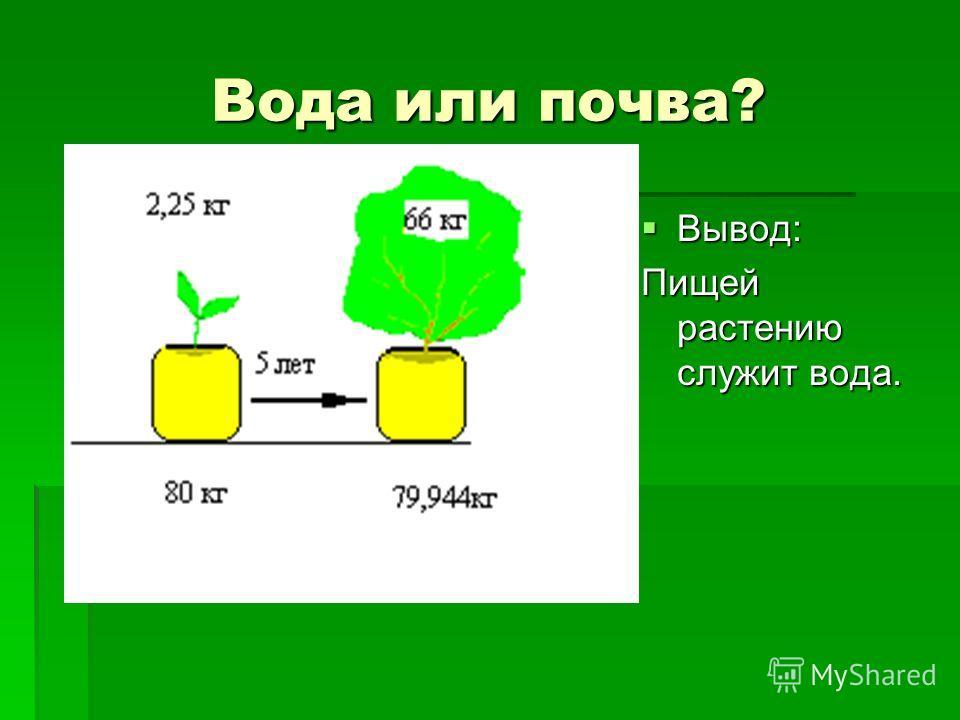 Вода или почва? Вывод: Вывод: Пищей растению служит вода.