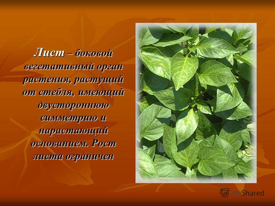Лист – боковой вегетативный орган растения, растущий от стебля, имеющий двустороннюю симметрию и нарастающий основанием. Рост листа ограничен