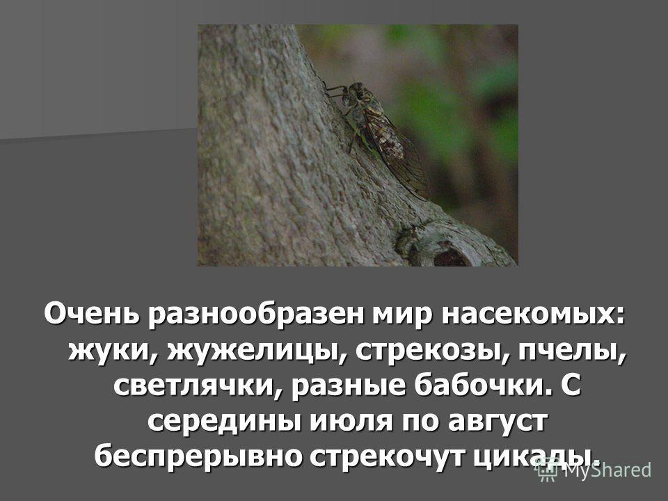 Очень разнообразен мир насекомых: жуки, жужелицы, стрекозы, пчелы, светлячки, разные бабочки. С середины июля по август беспрерывно стрекочут цикады.