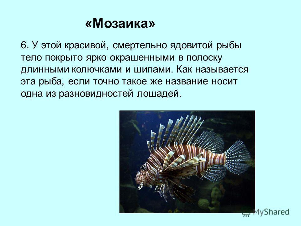 «Мозаика» 6. У этой красивой, смертельно ядовитой рыбы тело покрыто ярко окрашенными в полоску длинными колючками и шипами. Как называется эта рыба, если точно такое же название носит одна из разновидностей лошадей.