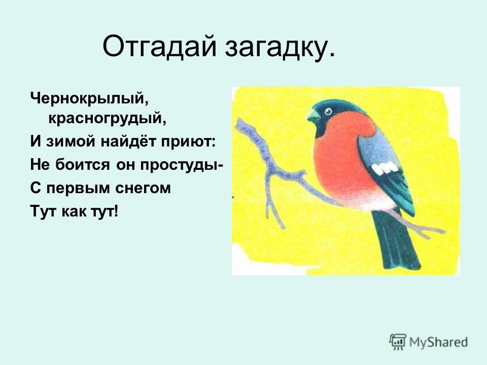 Отгадай загадку. Чернокрылый, красногрудый, И зимой найдёт приют: Не боится он простуды- С первым снегом Тут как тут!