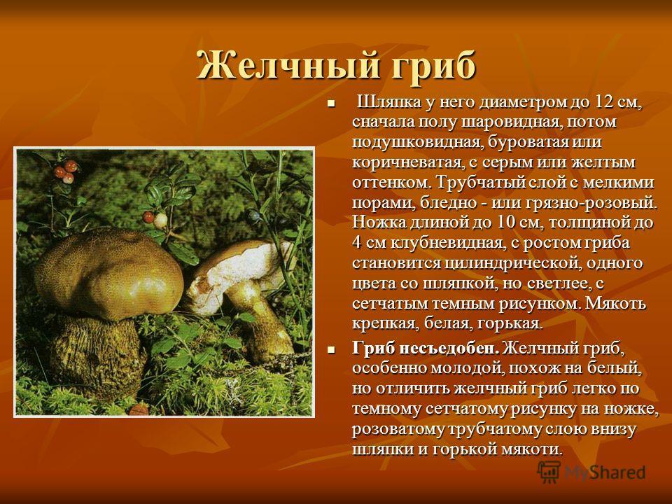 Желчный гриб Шляпка у него диаметром до 12 см, сначала полу шаровидная, потом подушковидная, буроватая или коричневатая, с серым или желтым оттенком. Трубчатый слой с мелкими порами, бледно - или грязно-розовый. Ножка длиной до 10 см, толщиной до 4 с
