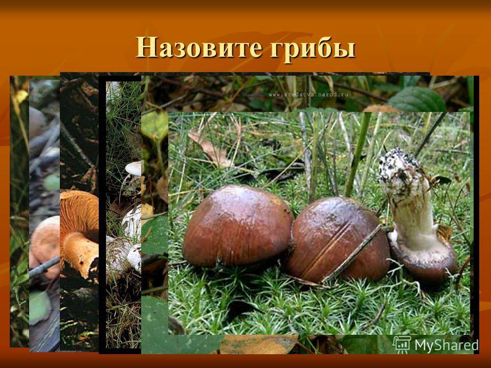 Назовите грибы