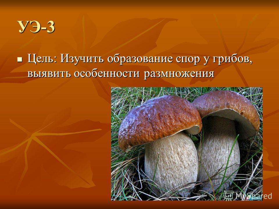 УЭ-3 Цель: Изучить образование спор у грибов, выявить особенности размножения Цель: Изучить образование спор у грибов, выявить особенности размножения