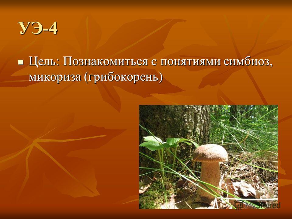 УЭ-4 Цель: Познакомиться с понятиями симбиоз, микориза (грибокорень) Цель: Познакомиться с понятиями симбиоз, микориза (грибокорень)