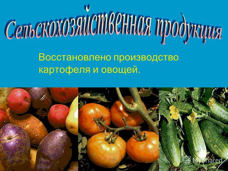 Восстановлено производство картофеля и овощей.