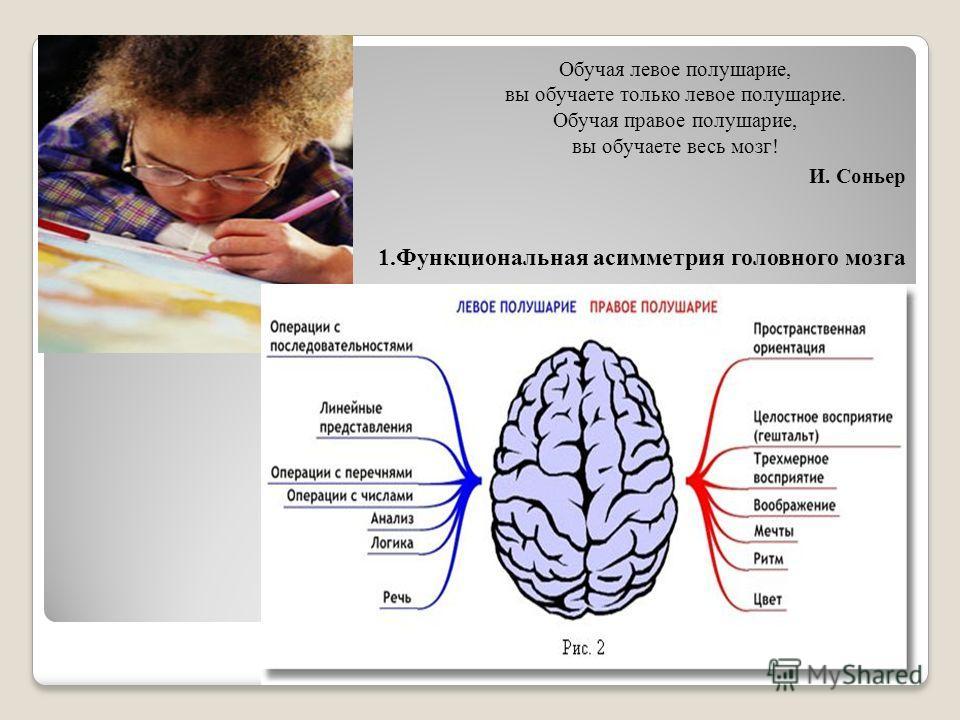 Обучая левое полушарие, вы обучаете только левое полушарие. Обучая правое полушарие, вы обучаете весь мозг! И. Соньер 1.Функциональная асимметрия головного мозга