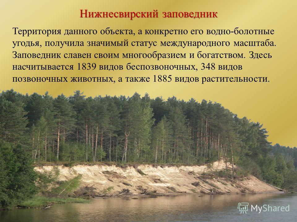 Нижнесвирский заповедник Территория данного объекта, а конкретно его водно-болотные угодья, получила значимый статус международного масштаба. Заповедник славен своим многообразием и богатством. Здесь насчитывается 1839 видов беспозвоночных, 348 видов