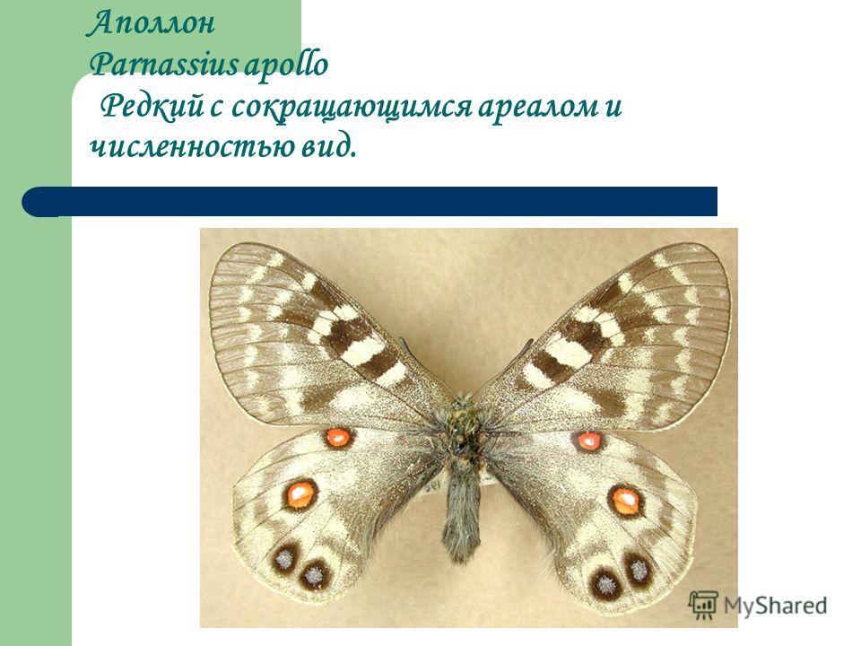 Аполлон Parnassius apollo Редкий с сокращающимся ареалом и численностью вид.