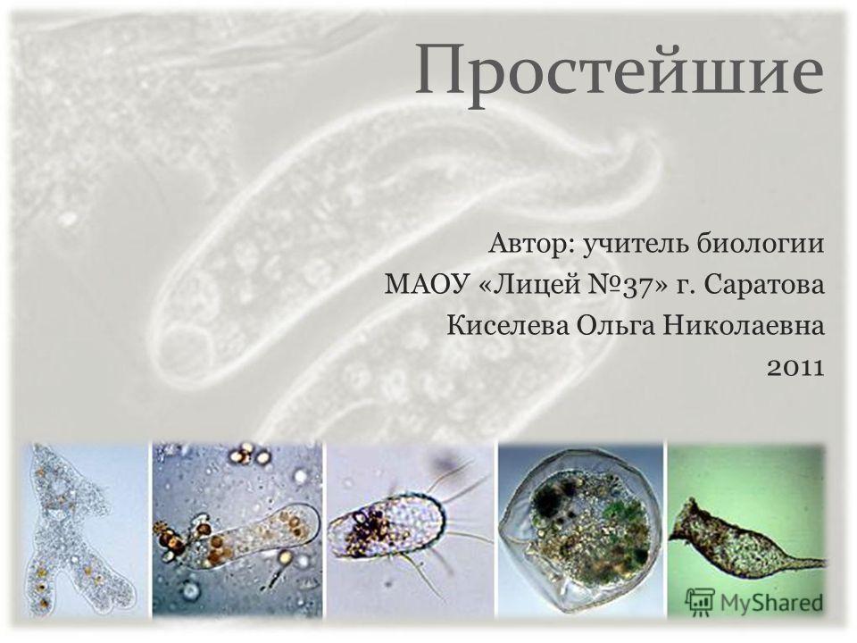 Простейшие Автор: учитель биологии МАОУ «Лицей 37» г. Саратова Киселева Ольга Николаевна 2011