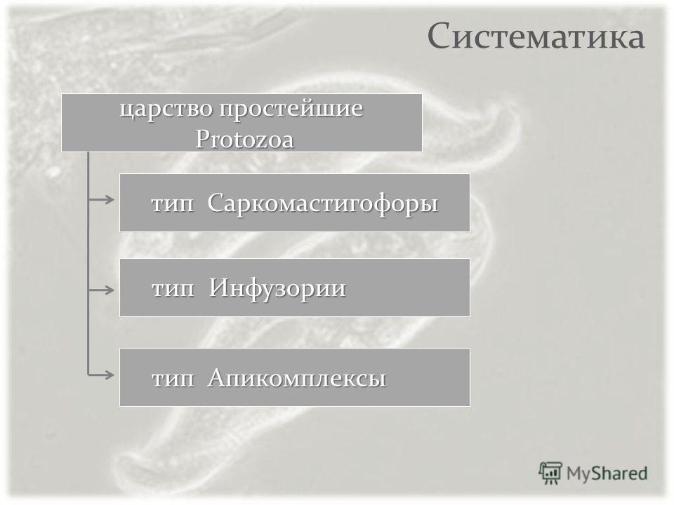 Систематика тип Саркомастигофоры тип Инфузории тип Инфузории царство простейшие Protozoa Protozoa тип Апикомплексы тип Апикомплексы