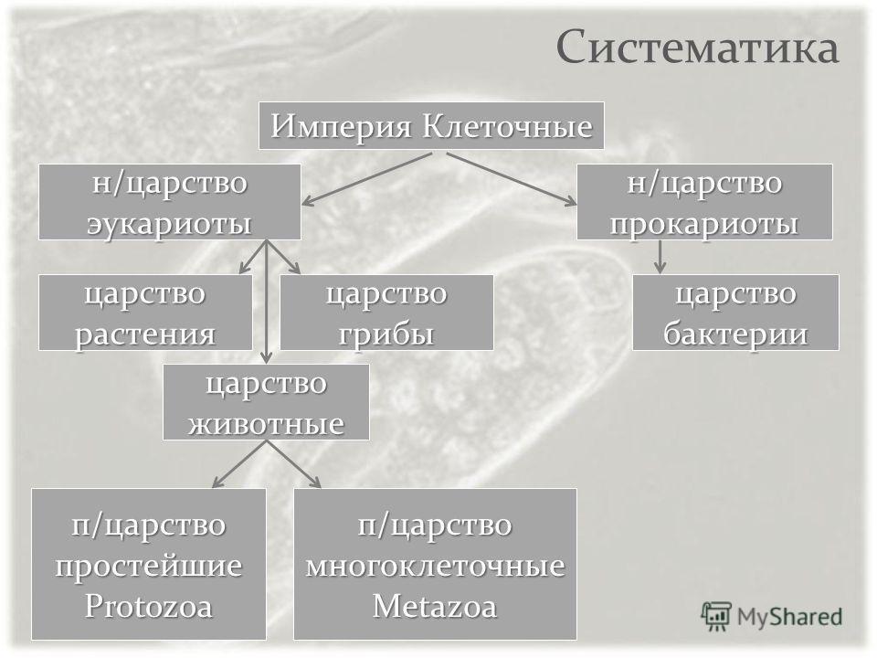 Систематика Империя Клеточные н/царство эукариоты н/царство прокариоты царствобактериицарстворастения царствоживотные царствогрибы п/царство многоклеточные Metazoa п/царствопростейшиеProtozoa