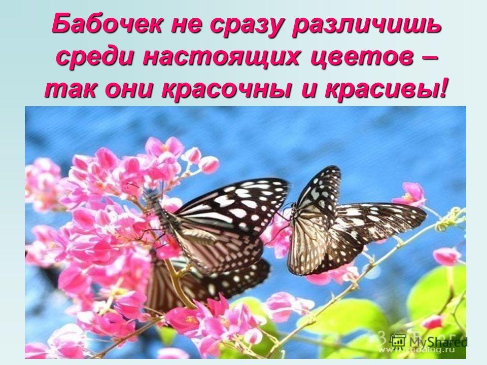 Бабочек не сразу различишь среди настоящих цветов – так они красочны и красивы!