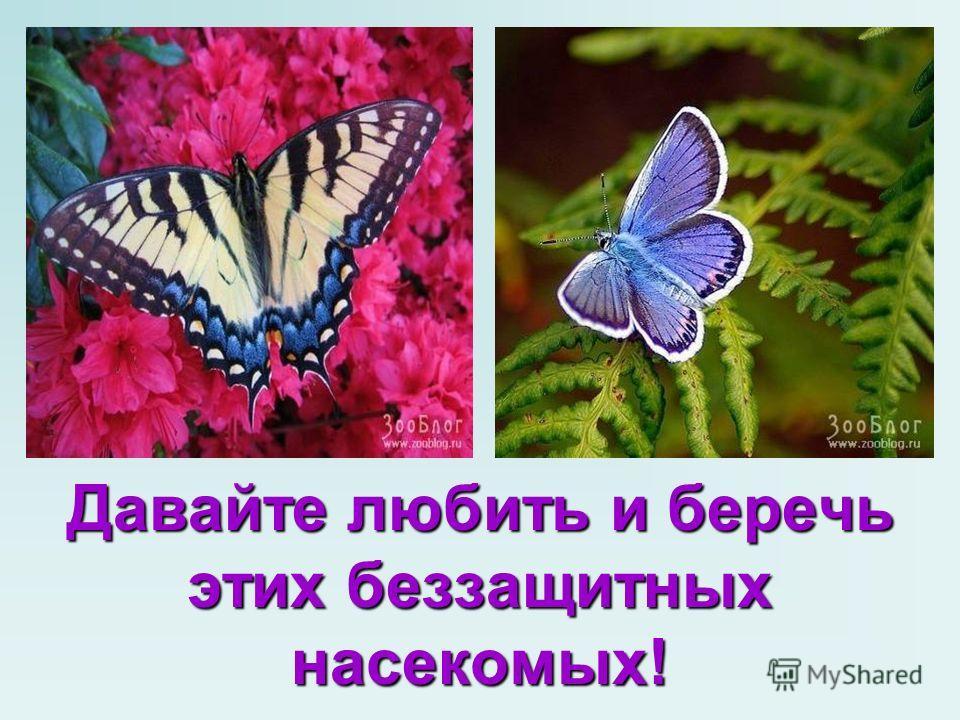 Давайте любить и беречь этих беззащитных насекомых!