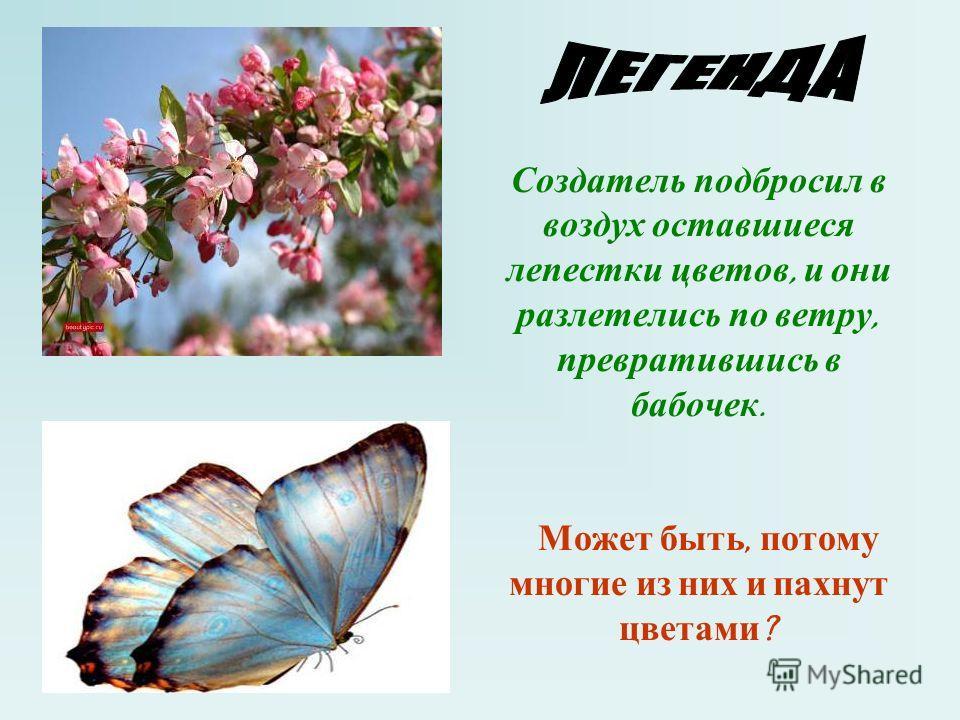 Создатель подбросил в воздух оставшиеся лепестки цветов, и они разлетелись по ветру, превратившись в бабочек. Может быть, потому многие из них и пахнут цветами ?