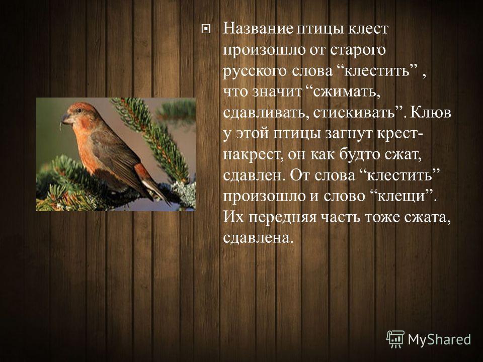 Название птицы клест произошло от старого русского слова клестить, что значит сжимать, сдавливать, стискивать. Клюв у этой птицы загнут крест - накрест, он как будто сжат, сдавлен. От слова клестить произошло и слово клещи. Их передняя часть тоже сжа