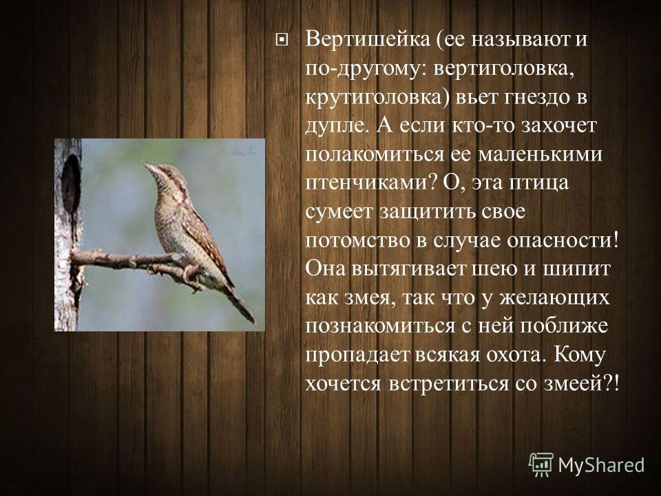 Вертишейка ( ее называют и по - другому : вертиголовка, крутиголовка ) вьет гнездо в дупле. А если кто - то захочет полакомиться ее маленькими птенчиками ? О, эта птица сумеет защитить свое потомство в случае опасности ! Она вытягивает шею и шипит ка