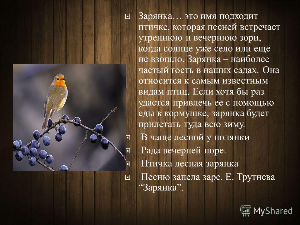 Зарянка … это имя подходит птичке, которая песней встречает утреннюю и вечернюю зори, когда солнце уже село или еще не взошло. Зарянка – наиболее частый гость в наших садах. Она относится к самым известным видам птиц. Если хотя бы раз удастся привлеч