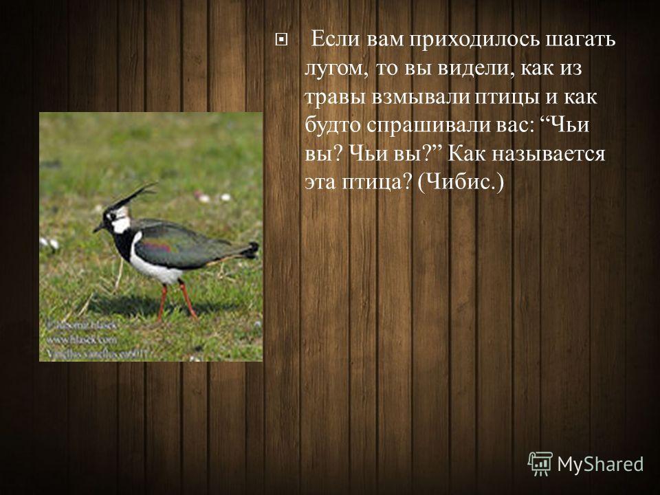 Если вам приходилось шагать лугом, то вы видели, как из травы взмывали птицы и как будто спрашивали вас : Чьи вы ? Чьи вы ? Как называется эта птица ? ( Чибис.)