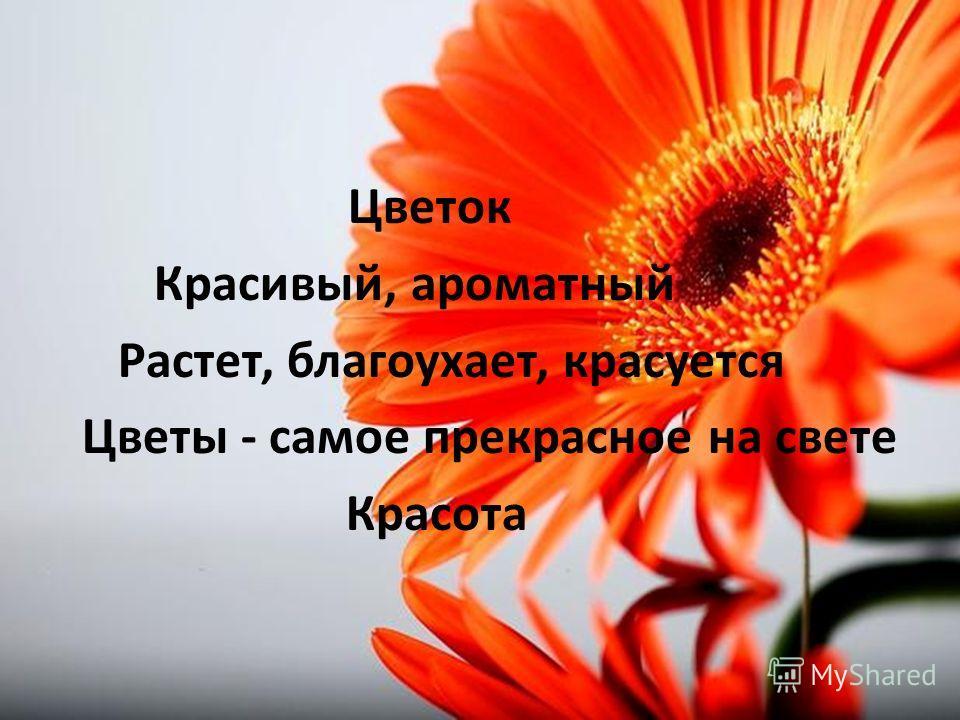 Цветок Красивый, ароматный Растет, благоухает, красуется Цветы - самое прекрасное на свете Красота