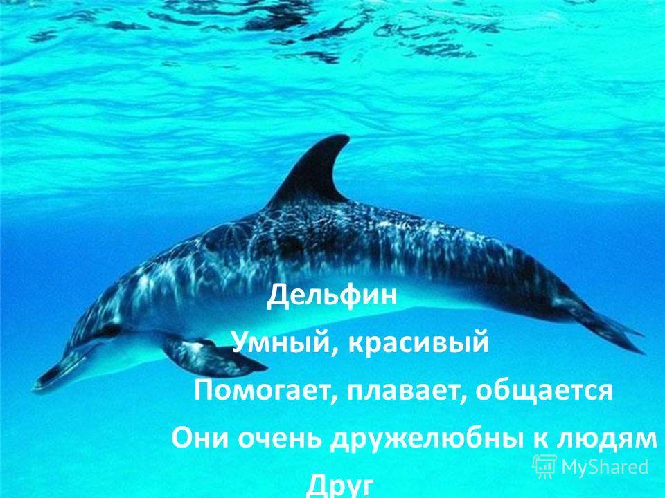Дельфин Умный, красивый Помогает, плавает, общается Они очень дружелюбны к людям Друг