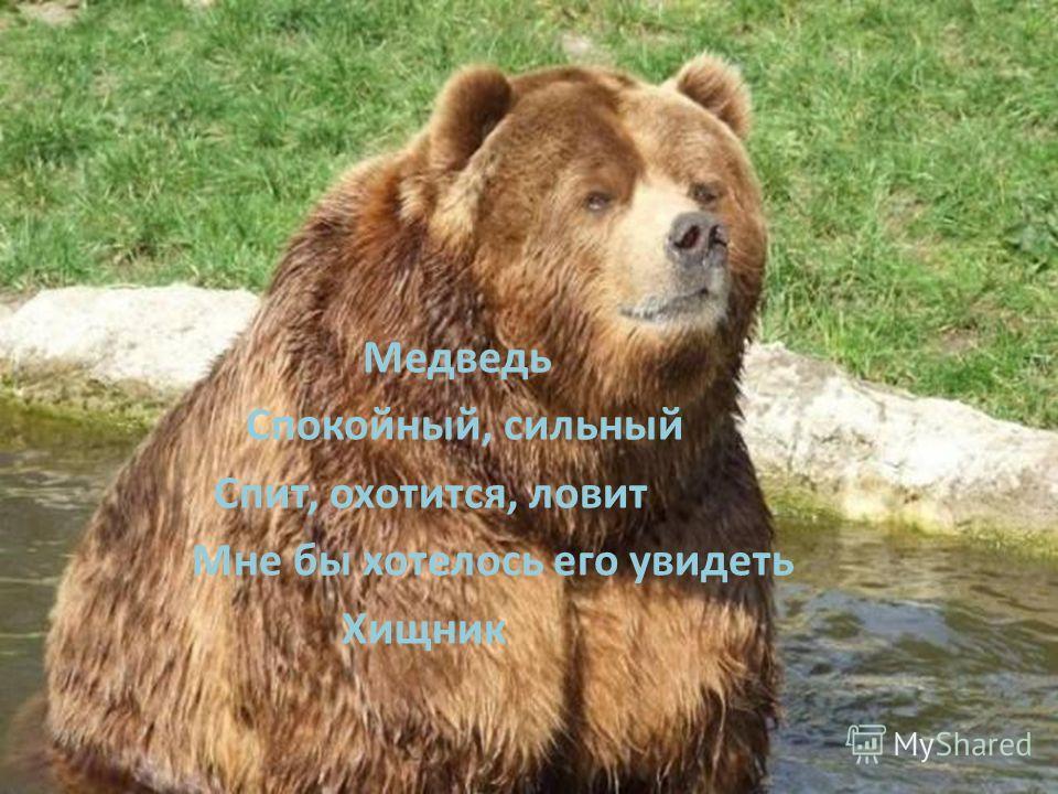 Медведь Спокойный, сильный Спит, охотится, ловит Мне бы хотелось его увидеть Хищник