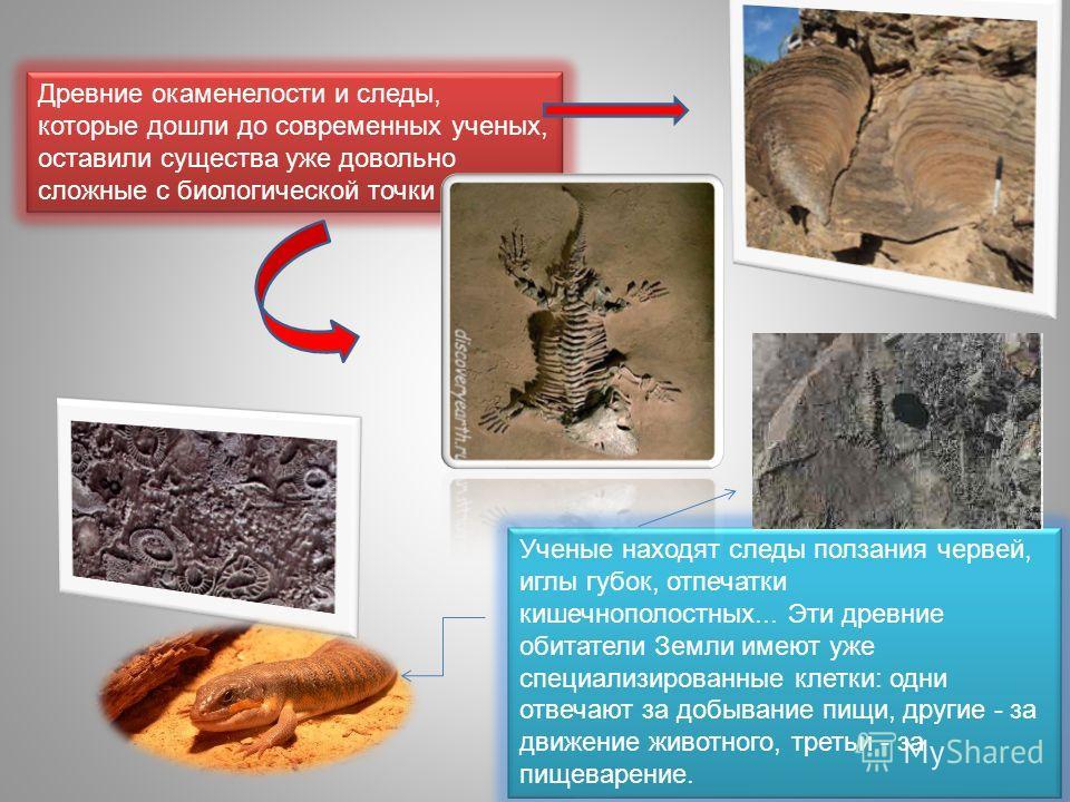 Древние окаменелости и следы, которые дошли до современных ученых, оставили существа уже довольно сложные с биологической точки зрения. Ученые находят следы ползания червей, иглы губок, отпечатки кишечнополостных... Эти древние обитатели Земли имеют