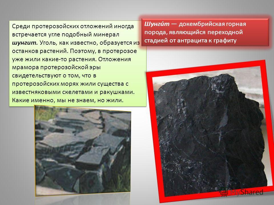 Среди протерозойских отложений иногда встречается угле подобный минерал шунгит. Уголь, как известно, образуется из останков растений. Поэтому, в протерозое уже жили какие-то растения. Отложения мрамора протерозойской эры свидетельствуют о том, что в