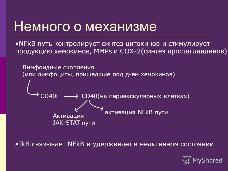 Немного о механизме NFkB путь контролирует синтез цитокинов и стимулирует продукцию хемокинов, MMPs и СОХ-2(синтез простагландинов) Лимфоидные скопления (или лимфоциты, пришедшие под д-ем хемокинов) CD40LCD40(на периваскулярных клетках) активация NFk
