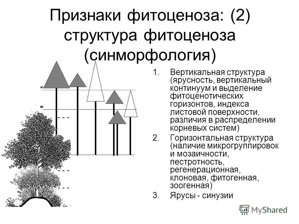 Признаки фитоценоза: (2) структура фитоценоза (синморфология) 1.Вертикальная структура (ярусность, вертикальный континуум и выделение фитоценотических горизонтов, индекса листовой поверхности, различия в распределении корневых систем) 2.Горизонтальна