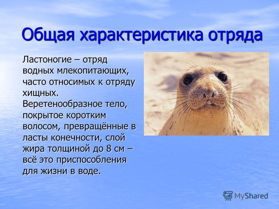 Общая характеристика отряда Ластоногие – отряд водных млекопитающих, часто относимых к отряду хищных. Веретенообразное тело, покрытое коротким волосом, превращённые в ласты конечности, слой жира толщиной до 8 см – всё это приспособления для жизни в в