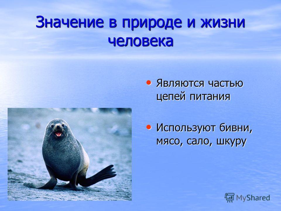 Значение в природе и жизни человека Являются частью цепей питания Являются частью цепей питания Используют бивни, мясо, сало, шкуру Используют бивни, мясо, сало, шкуру