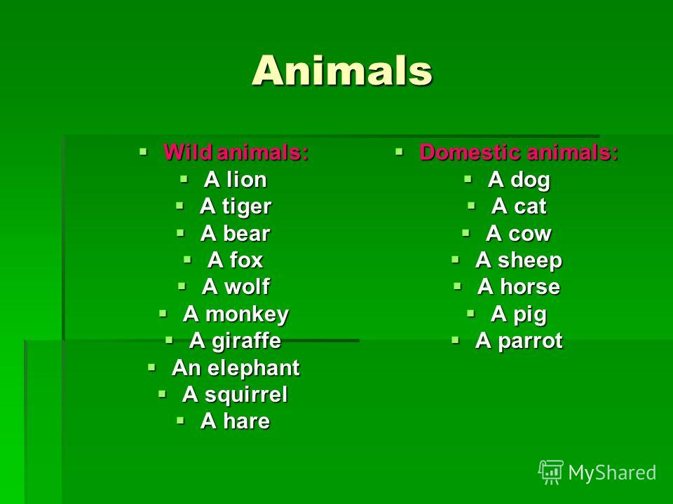 Animals Wild animals: Wild animals: A lion A lion A tiger A tiger A bear A bear A fox A fox A wolf A wolf A monkey A monkey A giraffe A giraffe An elephant An elephant A squirrel A squirrel A hare A hare Domestic animals: Domestic animals: A dog A do