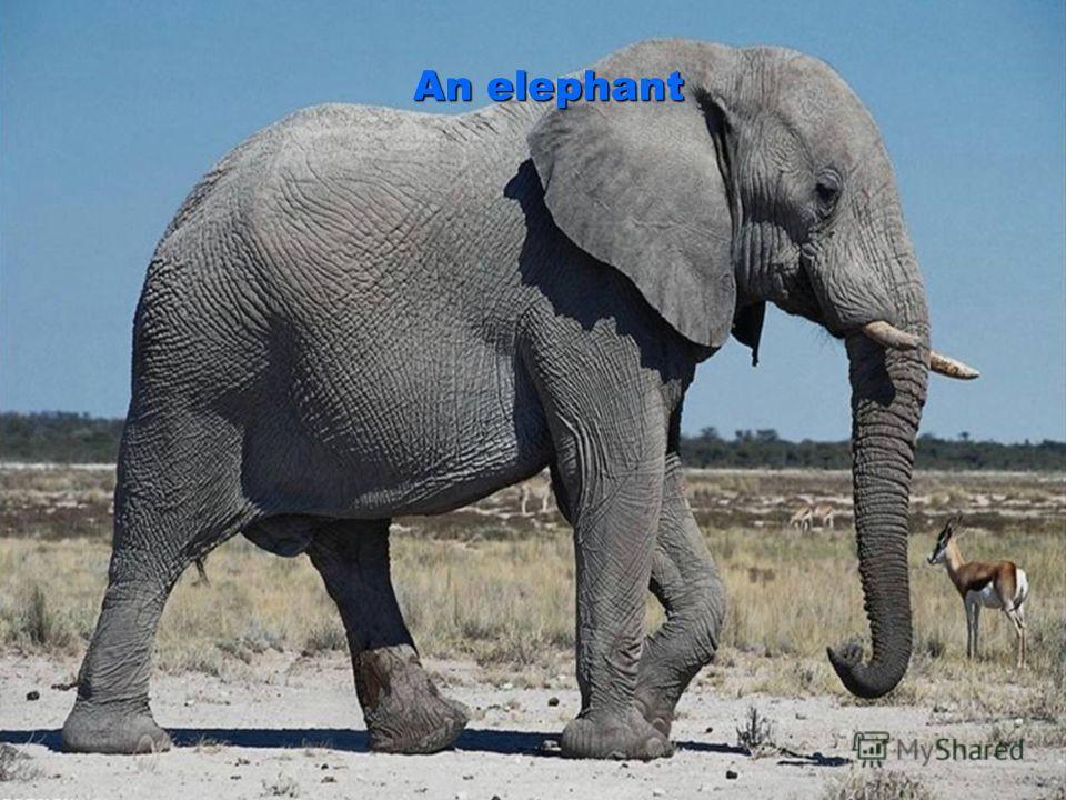 An elephant An elephant