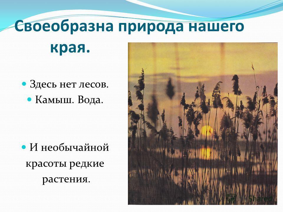 Своеобразна природа нашего края. Здесь нет лесов. Камыш. Вода. И необычайной красоты редкие растения.