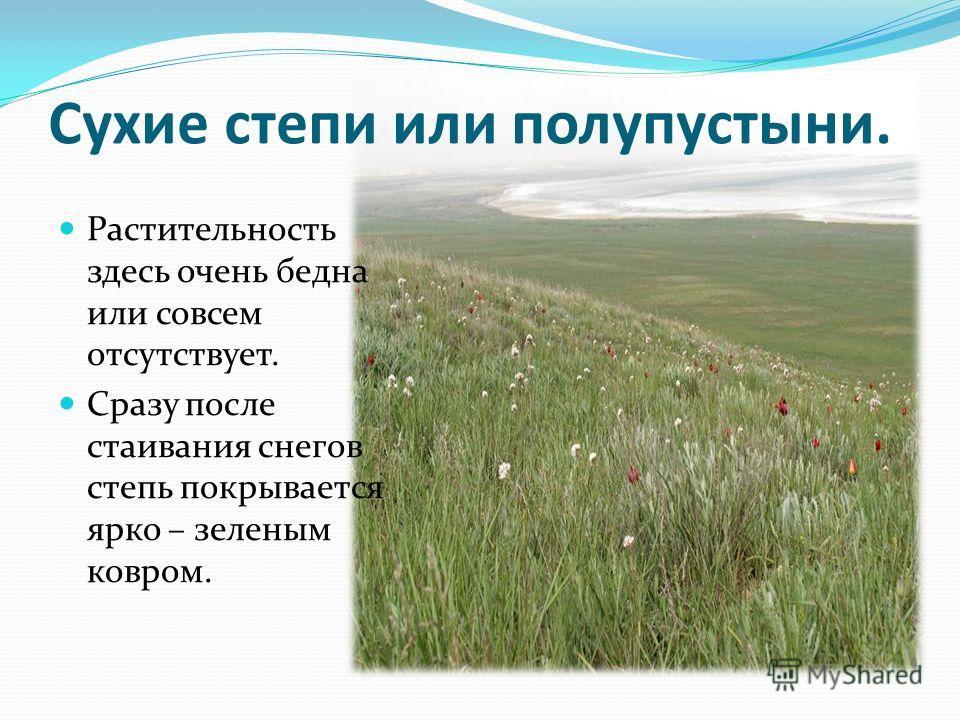 Сухие степи или полупустыни. Растительность здесь очень бедна или совсем отсутствует. Сразу после стаивания снегов степь покрывается ярко – зеленым ковром.