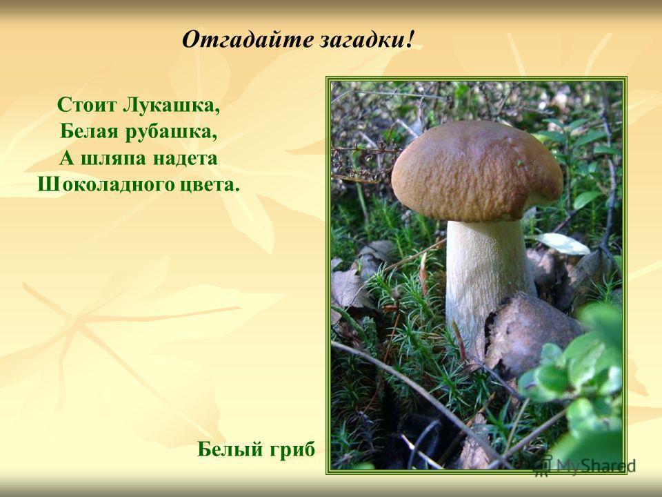 Отгадайте загадки! Стоит Лукашка, Белая рубашка, А шляпа надета Шоколадного цвета. Белый гриб