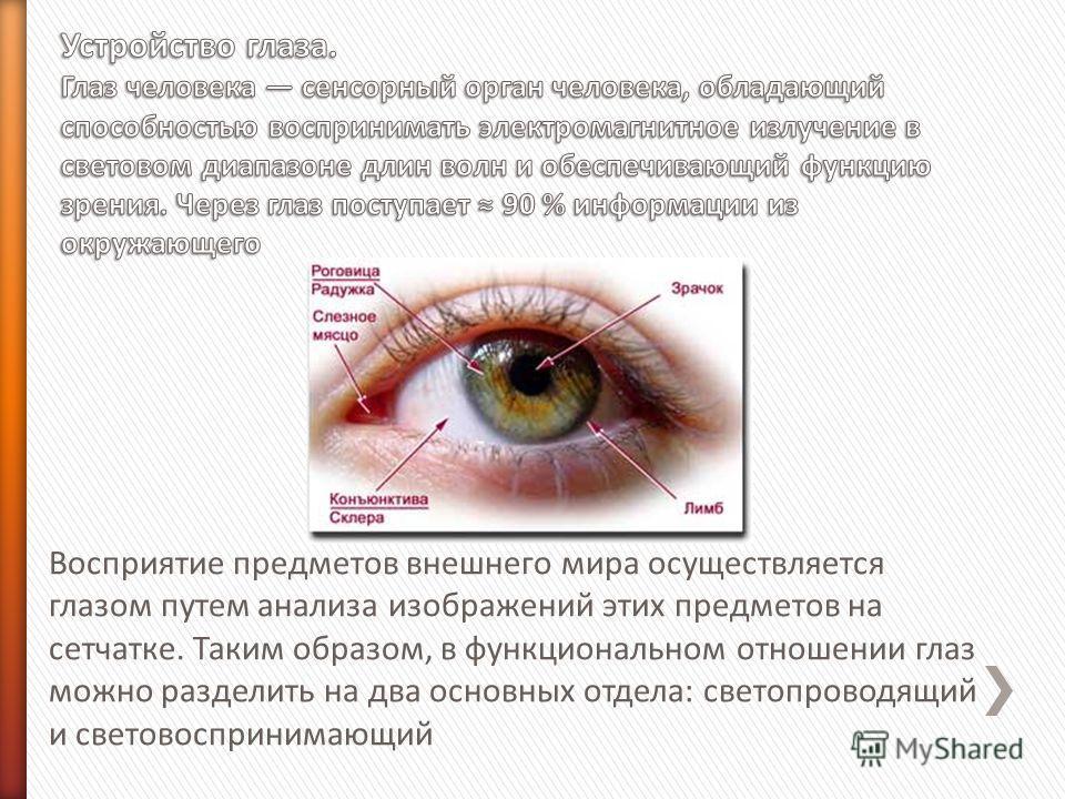 Восприятие предметов внешнего мира осуществляется глазом путем анализа изображений этих предметов на сетчатке. Таким образом, в функциональном отношении глаз можно разделить на два основных отдела: светопроводящий и световоспринимающий