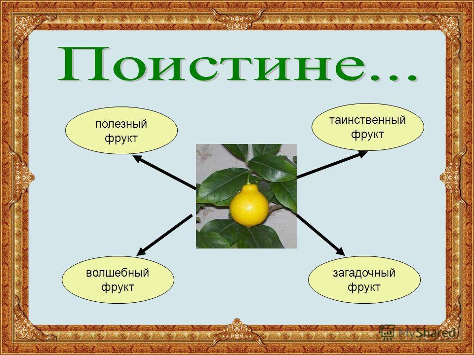волшебный фрукт загадочный фрукт таинственный фрукт полезный фрукт