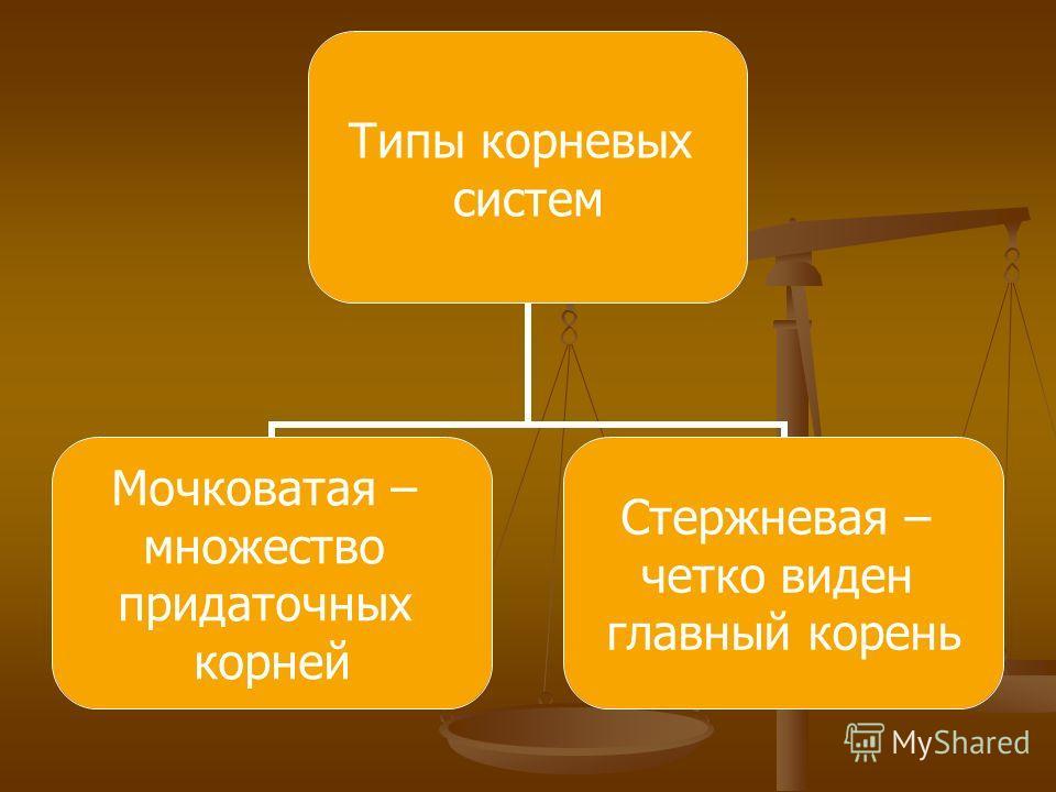 Типы корневых систем Мочковатая – множество придаточных корней Стержневая – четко виден главный корень