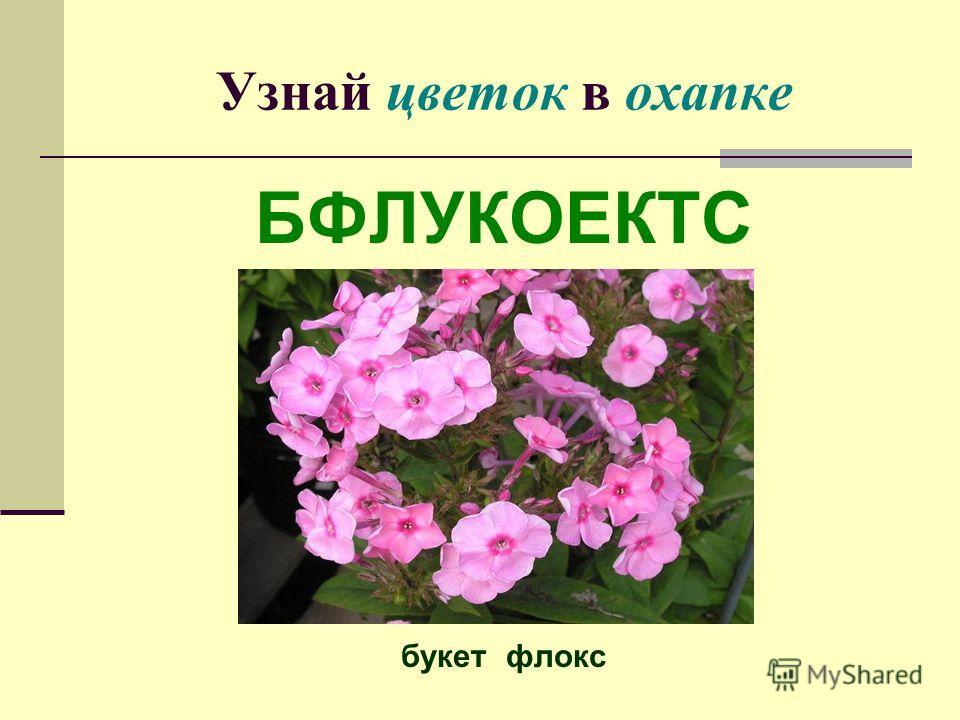 Узнай цветок в охапке БФЛУКОЕКТС букет флокс