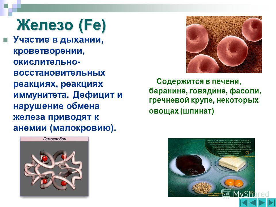 Железо (Fe) Участие в дыхании, кроветворении, окислительно- восстановительных реакциях, реакциях иммунитета. Дефицит и нарушение обмена железа приводят к анемии (малокровию). Содержится в печени, баранине, говядине, фасоли, гречневой крупе, некоторых