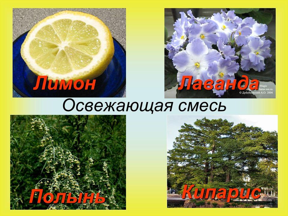 Освежающая смесь ЛимонЛаванда Полынь Кипарис