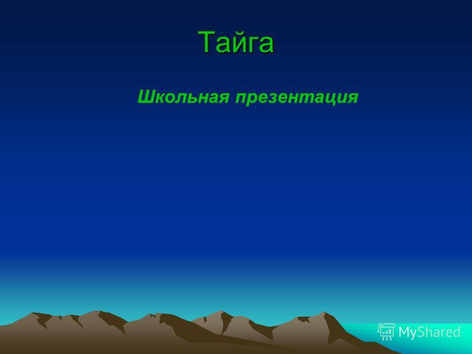Тайга Школьная презентация